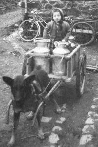 Die junge Christel Jost mit der familiären Hundekarre (Bild: privat)